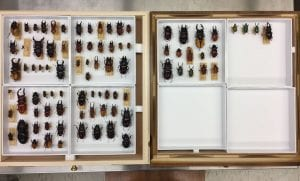 After image of all the beetles post to treatment