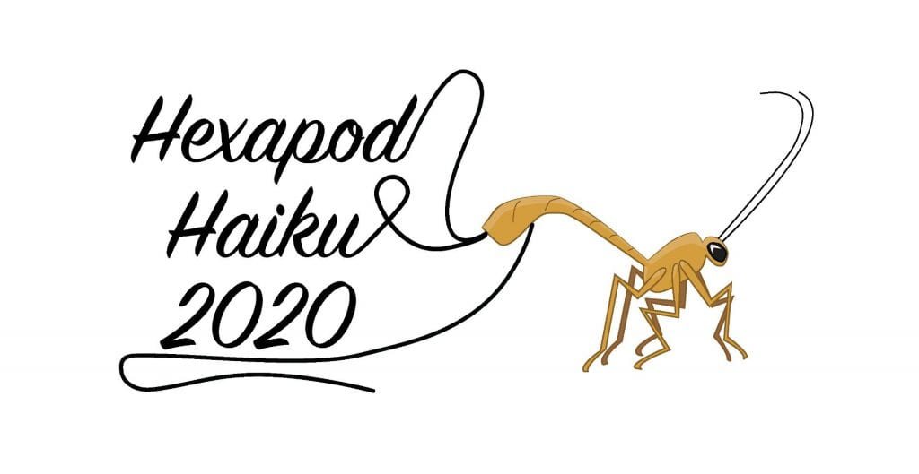 parasitic wasp; her ovipositor spells out the words Hexapod Haiku 2020