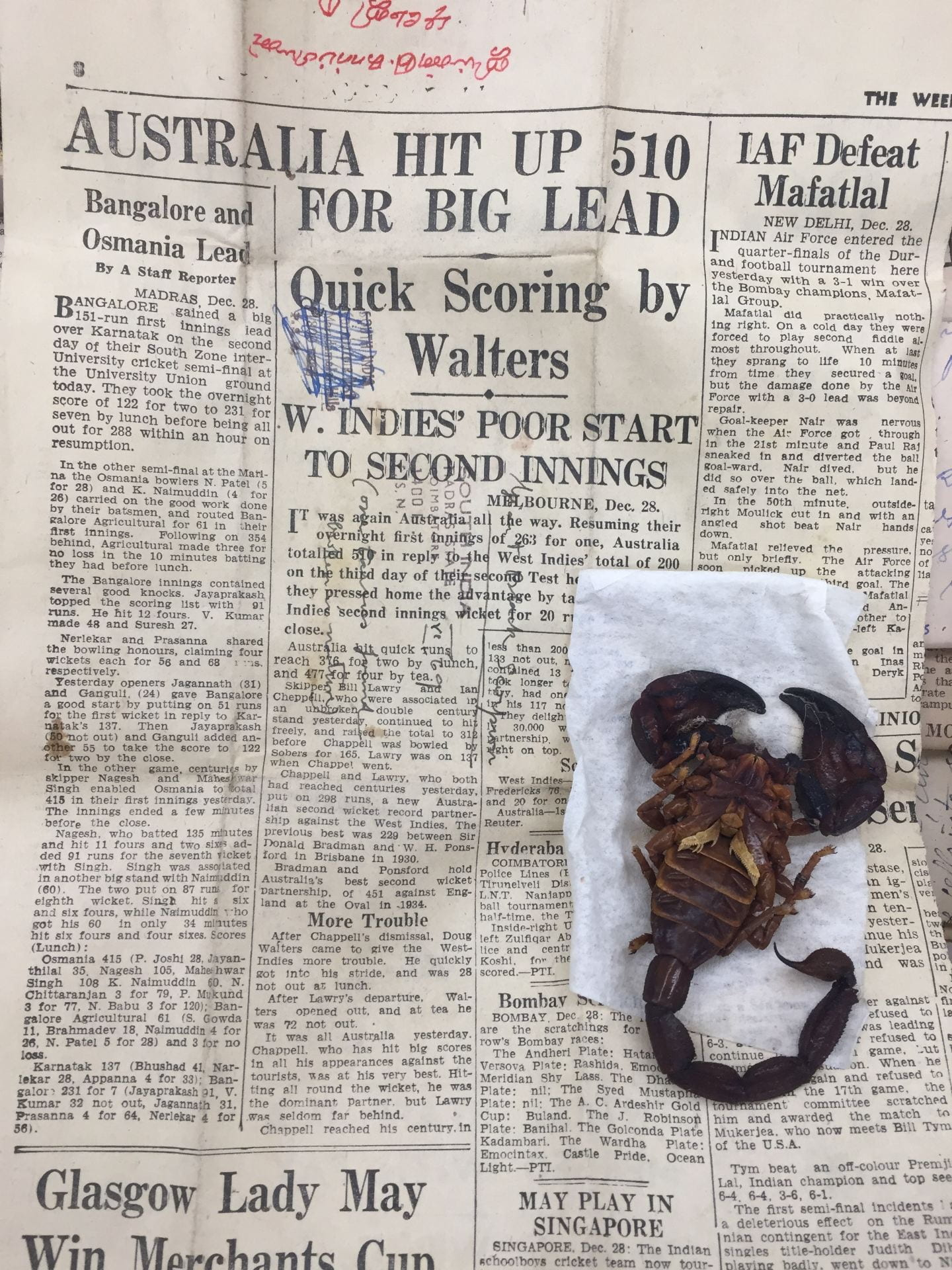 A scorpion specimen that had been wrapped in newspaper covering sportsball