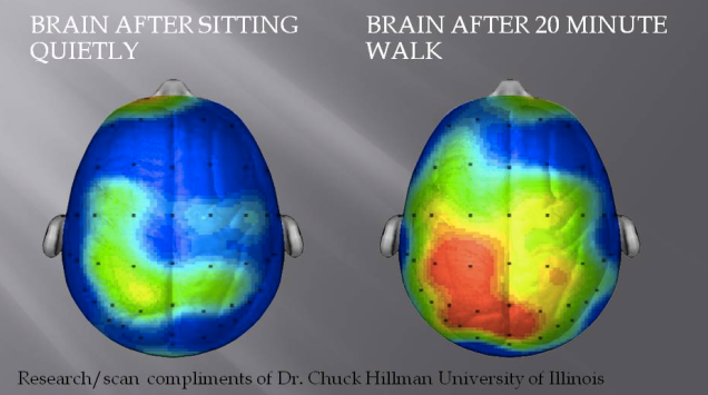 Brain activity increases after exercise.