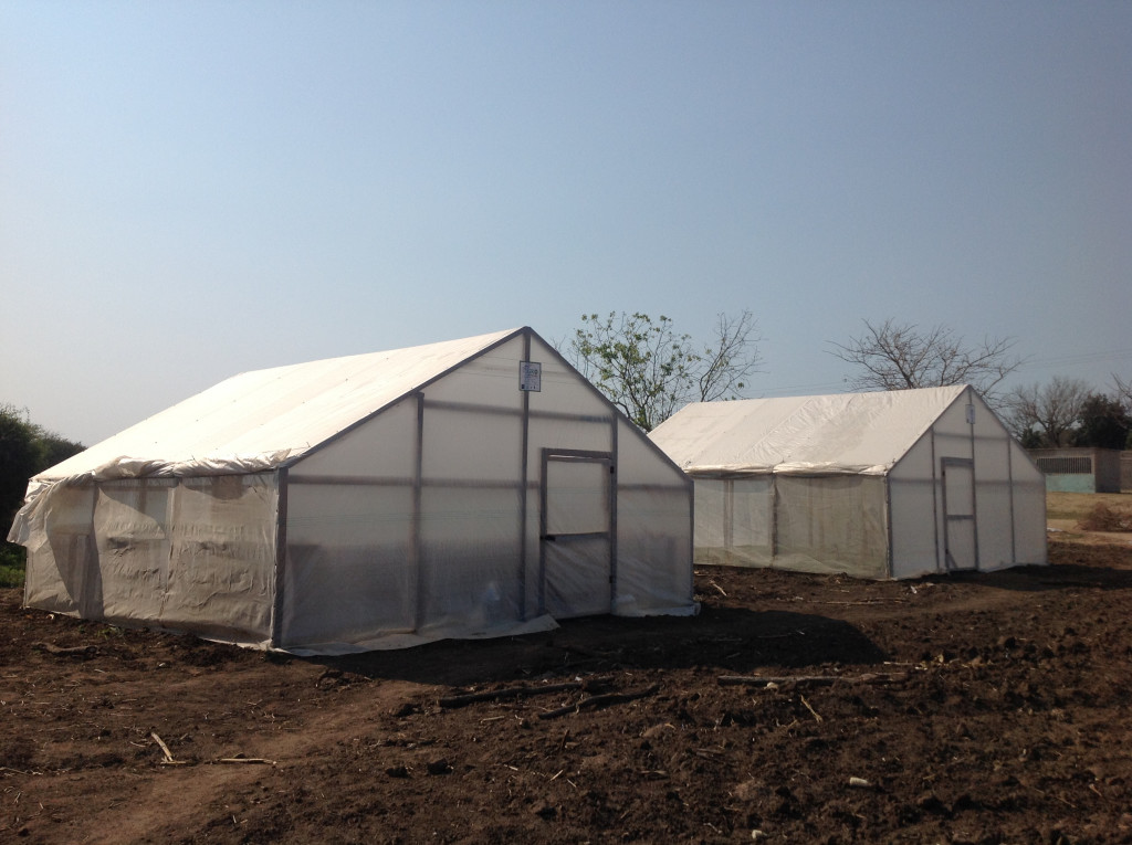 Our greenhouses were brought and are being used by a local agro-entrepreneur