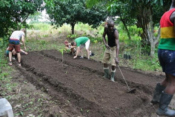 Making sheltered beds to mature the eg plant seeds before transplant of the semi matured seedlings to a larger field.