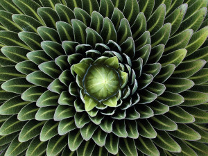 nature-pattern-photography-43