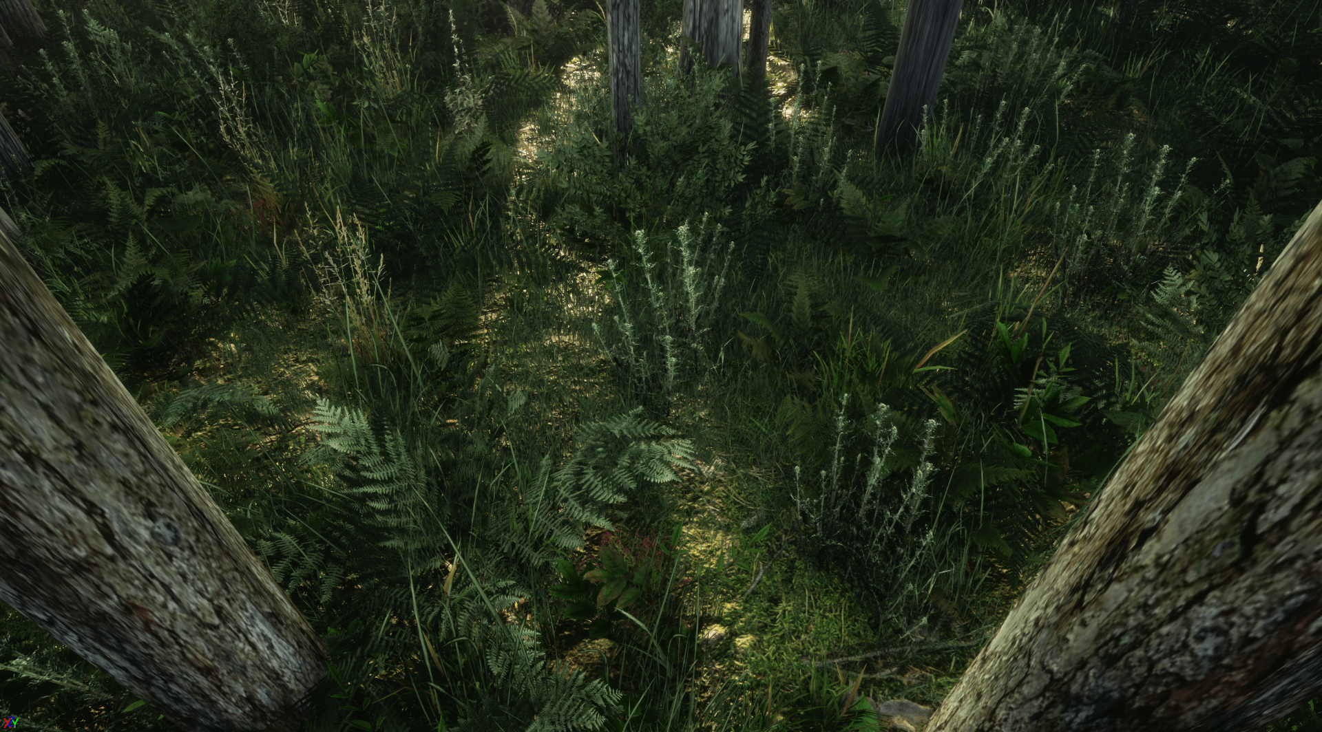Simulating Forest Futures in VR