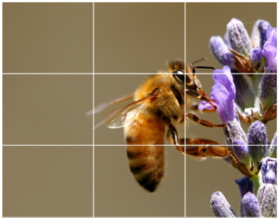 This picture has a grid, the way many smartphone camera apps have–if you turn them on. Having the grid on can help you place your content using the rule of thirds.