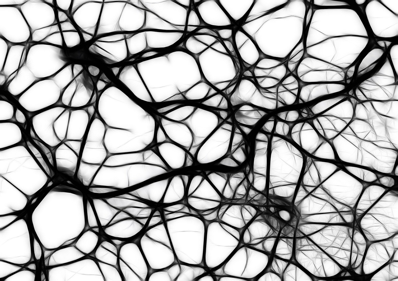 Black and white image of brain neurons