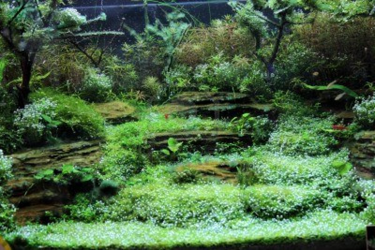 Freshwater fish for tanks - Why Freshwater