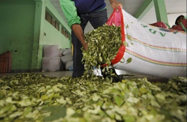 The Bolivian Coca Leaf : Penn State International Affairs Review