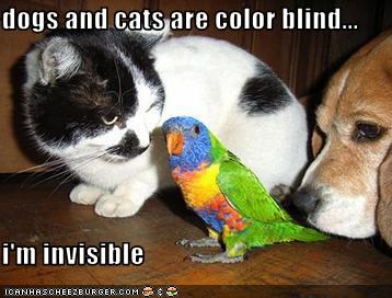 are dogs colorblind siowfa14 science in our world 87795