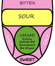 Diagram of the tongue and where flavors are tasted