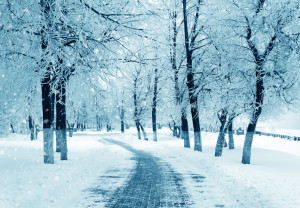 Winter nature, alley in park, snowstorm