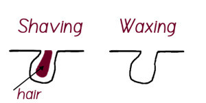 Waxing vs Shaving | SiOWfa15: Science in Our World: Certainty and  ControversySites at Penn State