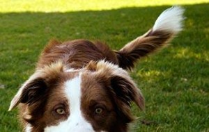 why-do-dogs-wag-their-tails0