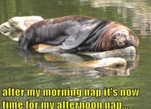 meme-morning-afternoon-nap