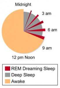 circadian_rhythm_pie_chart_vertical_reduced_260