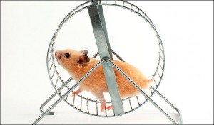 a-hamster