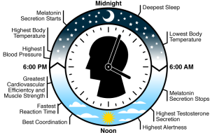 This image came from http://a2levelpsychology.blogspot.com/2015/06/a2-level-circadian-rhythm.html