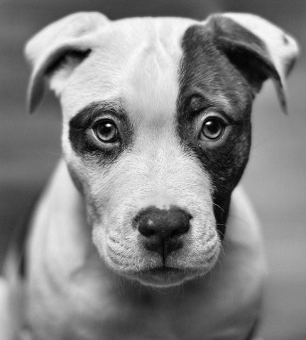 Black And White Photography Of Dogs