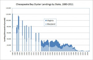 Taken from the Chesapeake Bay Office of the National Oceanic and Atmospheric Administration (http://chesapeakebay.noaa.gov/fish-facts/oysters)