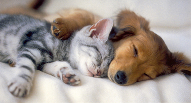 dog-sleeping-with-kitten