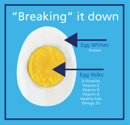 Are egg yolks unhealthy? | SiOWfa16: Science in Our World ...