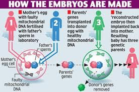 how-embryos-are-made
