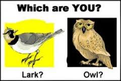 larks-and-owls