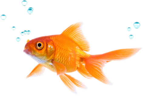 how to play against the fish who doesnt - Picture Of Fish