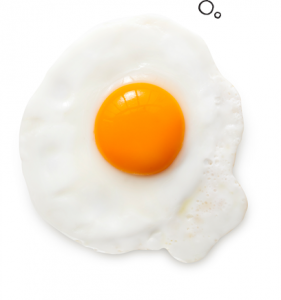 facts-left-egg