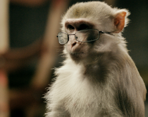monkey-glasses1