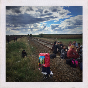 HUNGARY, Hungarian-Serbian border. Near Röszke/Szeged, 2015/09. Refugees, mostly from Syria and Afganistan walke unhindered through a gap in the hungarian border fence on a dysfunct railway line but are collected for processing by Hungarian authorities. Those who want to avoid processing climb over the fence and try to move North without being caught by Hungarian police.