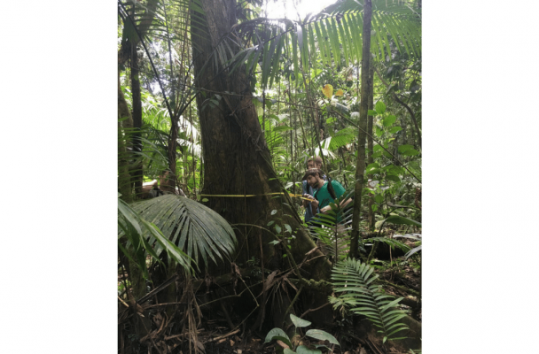Students taking measurements of trees in the rainforest