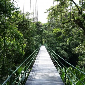 suspension bridge into rain forest