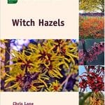 Witch Hazels bookcover