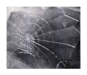 vija_celmins_spider_web_640x480