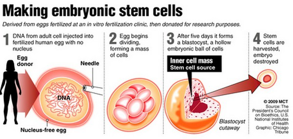 A discussion on the embryonic stem cell research