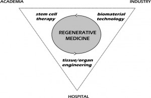 pluripotent stem cells benefits properties and uses Pluripotent stem cells are called master cells because they are able to make cells from all three body layers, so they can produce any cells or body.