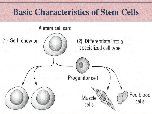 how are stem cells different from normal body cells the benefits